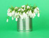 Bouquet of snowdrop flowers in metal can,on color background — Stock Photo