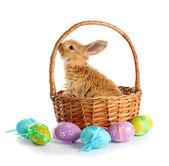 Fluffy foxy rabbit in basket with Easter eggs isolated on white — Stock Photo