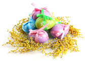 Easter eggs and mimosa flowers, isolated on white — Stock Photo