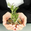 Woman hands with green plant and coins isolated on whit — Stock Photo