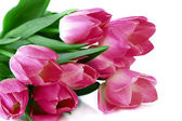 Pink tulips isolated on white — Stock Photo
