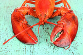 Red lobster on wooden table close-up — Stock Photo