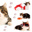 Collage of cats isolated on white - Stock Photo