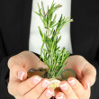 Woman hands with green plant and coins, close u — Stock Photo