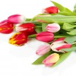 Beautiful tulips in bucket isolated on white — Stock Photo