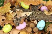 Velikonoční vajíčka ukrytá v listí — Stock fotografie