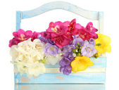 Beautiful bouquet of freesias in wooden basket, isolated on white — Stock Photo