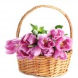 Beautiful bouquet of purple tulips in basket, isolated on white — Stock Photo #22067659