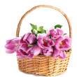 Beautiful bouquet of purple tulips in basket, isolated on white — Stockfoto #22067659