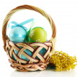 Easter eggs in basket and mimosa flowers, isolated on white - 图库照片