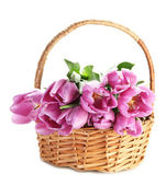 Beautiful bouquet of purple tulips in basket, isolated on white — Stock Photo