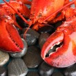 Red lobster on stones close-up - Stock Photo