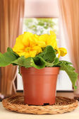 Beautiful yellow primula in flowerpot on wooden window sill — Foto Stock