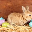 Fluffy foxy rabbit in a haystack with Easter eggs on wooden background - Stock Photo