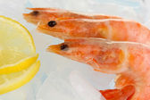 Shrimps on ice close-up — 图库照片