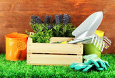 Garden tools on grass in yard — Stok fotoğraf
