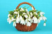 枝編み細工品バスケット、背景の色で春スノー ドロップの花 — ストック写真