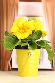 木製の窓枠に植木鉢で美しい黄色プリムラ — ストック写真