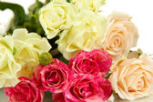 Beautiful colorful roses close-up isolated on white — Stock Photo