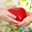 Red heart in woman and man hands, on green background — Stock Photo #22374105
