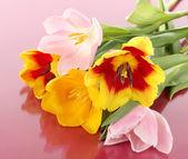 Piękne tulipany w wiaderko na różowym tle — Zdjęcie stockowe