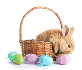 Fluffy foxy rabbit in basket with Easter eggs isolated on white — Photo