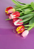 Beautiful tulips in bucket on purple background — Stock Photo