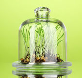 Grass under glass cover on green background — Stock Photo