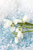 Bouquet of snowdrop flowers, on snow background — Stock Photo