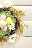 Oeufs de pâques au nid et mimosa fleurs, sur fond en bois blanc — Photo