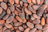 Cocoa beans, close up — Stock Photo