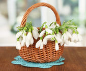 Spring snowdrop flowers in wicker basket,on wooden table, on bright background — Stock Photo