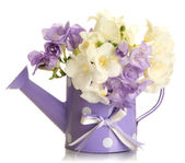 Beautiful bouquet of freesias in watering can, isolated on white — Stock Photo