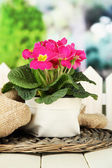 Beautiful pink primula in flowerpot, on wooden table, on green background — Stock Photo