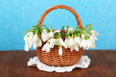 Spring snowdrop flowers in wicker basket,on wooden table, on color background — Stock Photo