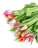 Beautiful tulips in bucket isolated on white — Стоковое фото