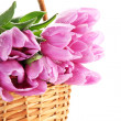 Beautiful bouquet of purple tulips in basket, isolated on white — Stockfoto #22649959