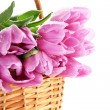 Beautiful bouquet of purple tulips in basket, isolated on white — Stock Photo #22649959