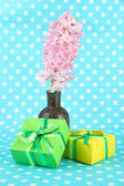 Beautiful hyacinth in vase and beautiful gifts, on color background — Stock Photo