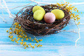 Easter eggs in nest and mimosa flowers, on blue wooden background — Stock Photo