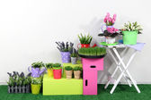 Colorful shelves and table with decorative elements standing on grass — Stock Photo