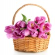 Beautiful bouquet of purple tulips in basket, isolated on white — Stock Photo #22719889