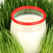 Glass bottle of milk standing on grass close up — Stock Photo