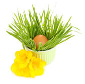 Easter egg in bowl with grass on table isolated on white — Stock Photo