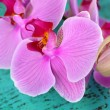 Gentle beautiful orchid on wooden table close-up — Stock Photo