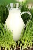 Sklenice džbán mléka stojící na trávě zblízka — Stock fotografie