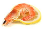 Shrimps isolated on white — Foto de Stock