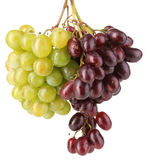 Delicious ripe two bunches of grapes isolated on white — Stock Photo
