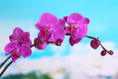 Gentle beautiful orchid on natural background — Stock Photo
