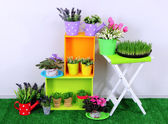 Beautiful colorful shelves and table with decorative elements standing on grass — Stock Photo